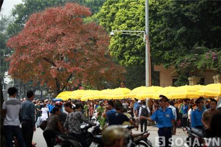 Vào hồi 11h50p ngày 10/10, tán lá của cây Bằng Lăng đã hoàn toàn chuyển sang màu đỏ.