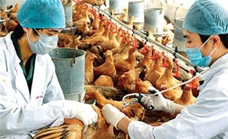 cúm gia cầm H5N1, H7N9