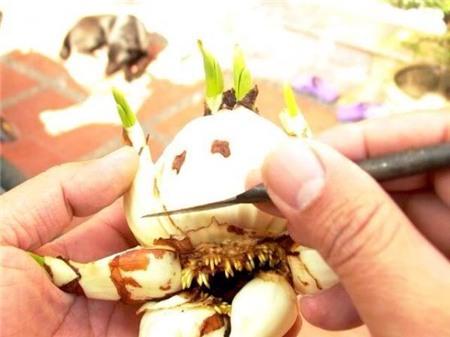 Chị em sành chơi thủy tiên nở hoa đúng đêm Giao thừa - 7