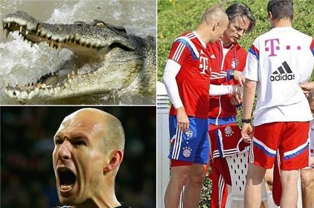 Robben dính chấn thương vì... cá sấu tấn công!