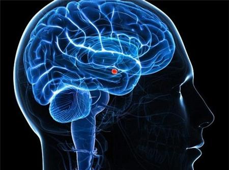 bộ não, sợ hãi, nơi trú ngụ, rối loạn lo âu, bệnh tâm thần