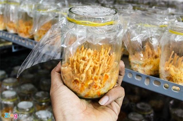 Đông trùng hạ thảo bạc tỷ bán vài chục triệu đồng ở Việt Nam