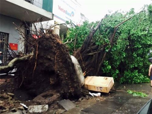 Cận cảnh Hà Nội thành bãi chiến trường sau cơn bão thổi cây bật vỉa hè, lật xe tải - Ảnh 1