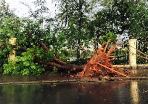 Cận cảnh Hà Nội thành bãi chiến trường sau cơn bão thổi cây bật vỉa hè, lật xe tải - Ảnh 2