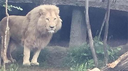 Sư tử, cá sấu tràn ra đường sau cơn dông lớn ảnh 6