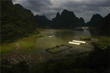 Kinh hoàng cảnh 16 ngàn con lợn chết đuối vì mưa lũ - Ảnh 3