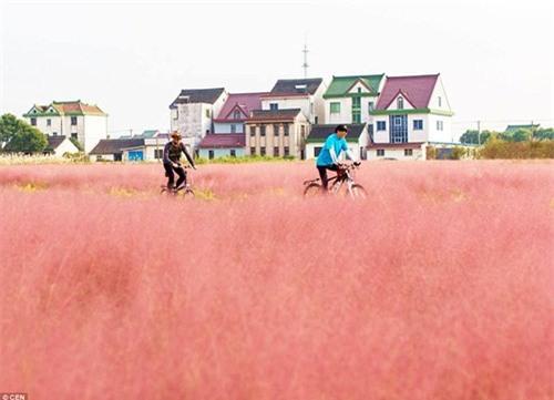 Giới trẻ mê mẩn cánh đồng cỏ hồng đẹp như mơ - 10