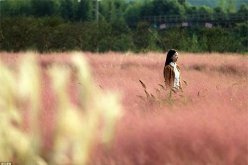 Giới trẻ mê mẩn cánh đồng cỏ hồng đẹp như mơ - 6