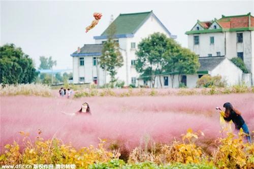 Giới trẻ mê mẩn cánh đồng cỏ hồng đẹp như mơ - 8