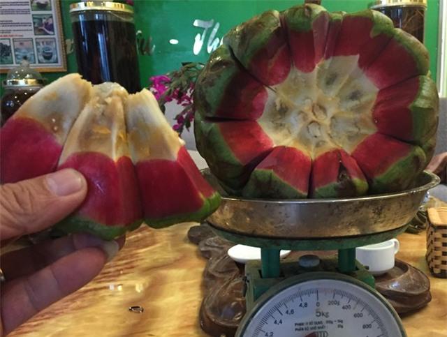 Vì sao quả na rừng 5 kg có giá 500.000 đồng?