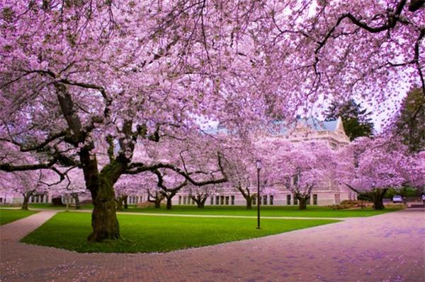 Đi du lịch Nhật Bản vào thời điểm nào là thích hợp nhất? - Ảnh 2
