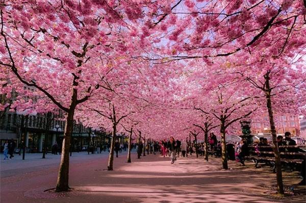 Đi du lịch Nhật Bản vào thời điểm nào là thích hợp nhất? - Ảnh 3
