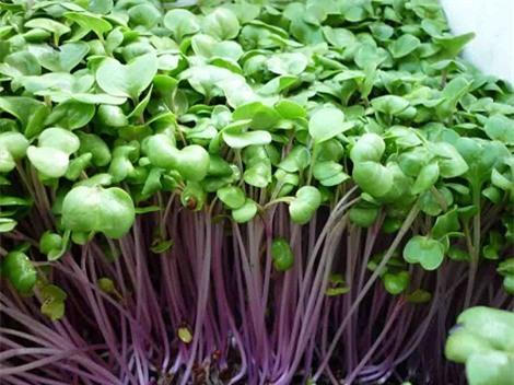 Khám phá những lợi ích của rau mầm đối với sức khỏe 0
