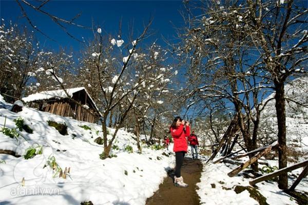 Những hình ảnh tuyết trắng đẹp lạ thường ở Sapa 12