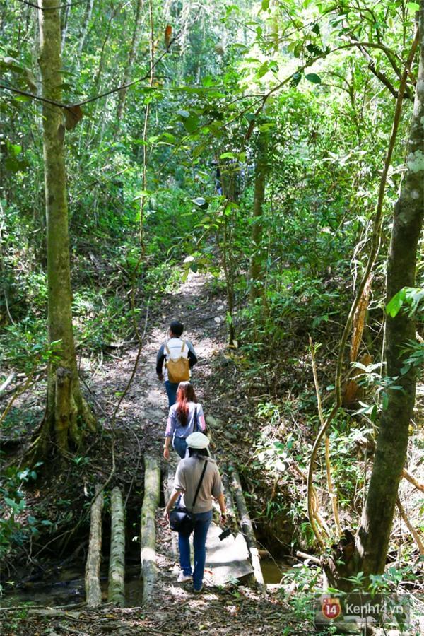 Mê mẩn với cánh rừng lá phong độc nhất vô nhị tại Đà Lạt - Ảnh 10.