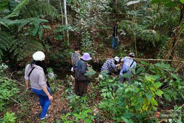 Mê mẩn với cánh rừng lá phong độc nhất vô nhị tại Đà Lạt - Ảnh 11.