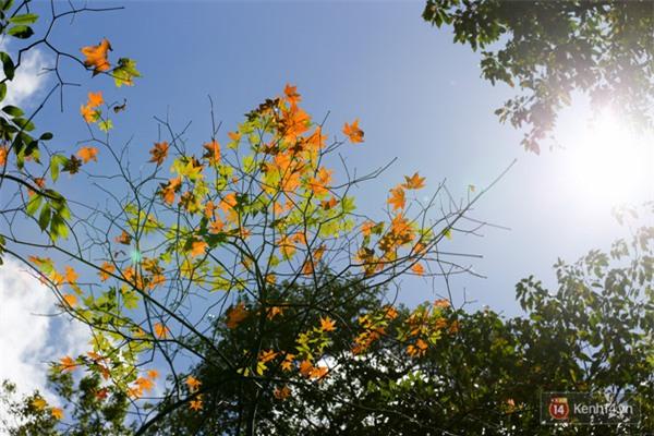 Mê mẩn với cánh rừng lá phong độc nhất vô nhị tại Đà Lạt - Ảnh 25.