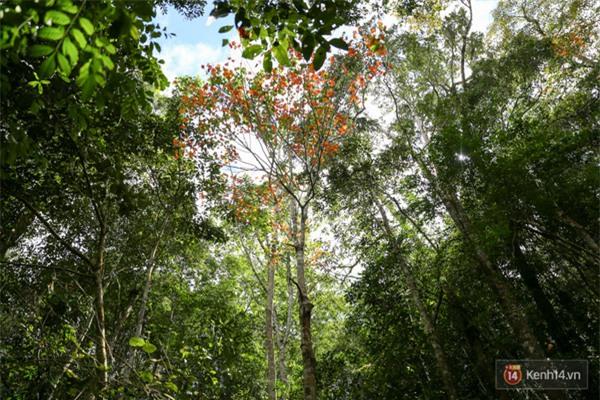 Mê mẩn với cánh rừng lá phong độc nhất vô nhị tại Đà Lạt - Ảnh 31.