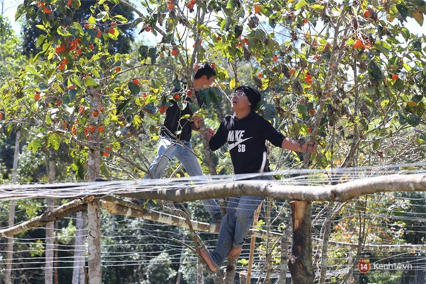 Mê mẩn với cánh rừng lá phong độc nhất vô nhị tại Đà Lạt - Ảnh 33.