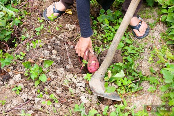 Mê mẩn với cánh rừng lá phong độc nhất vô nhị tại Đà Lạt - Ảnh 35.