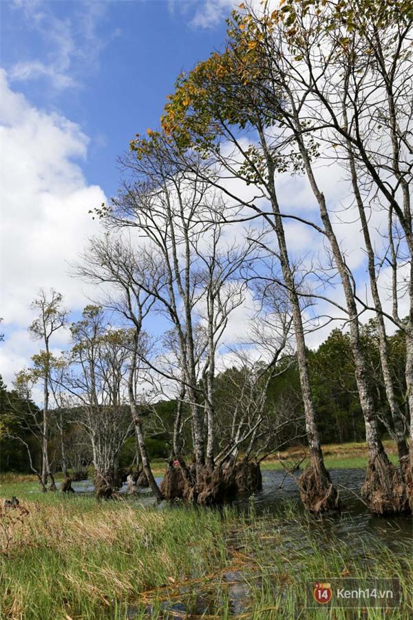 Mê mẩn với cánh rừng lá phong độc nhất vô nhị tại Đà Lạt - Ảnh 7.