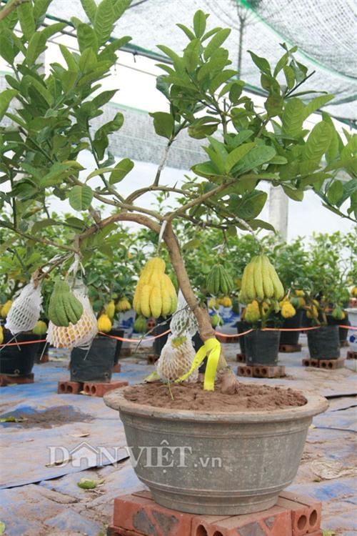 vao vuon phat thu bonsai nghin cay gia bac trieu van hut khach hinh anh 15