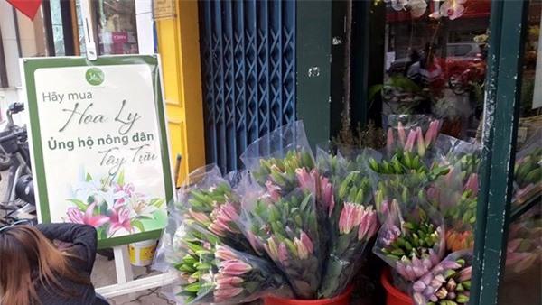 Hoa ly, hoa ly giá rẻ, thanh lý hoa ly