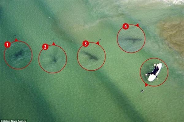 Kinh hoàng khoảnh khắc cô gái trẻ bị 5 con cá mập khổng lồ bao vây giữa biển khơi - Ảnh 2.