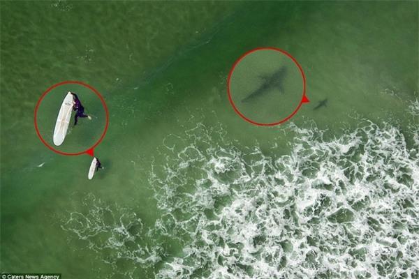 Kinh hoàng khoảnh khắc cô gái trẻ bị 5 con cá mập khổng lồ bao vây giữa biển khơi - Ảnh 4.