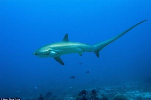 Kinh hoàng khoảnh khắc cô gái trẻ bị 5 con cá mập khổng lồ bao vây giữa biển khơi - Ảnh 5.