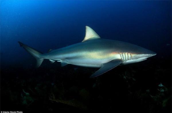Kinh hoàng khoảnh khắc cô gái trẻ bị 5 con cá mập khổng lồ bao vây giữa biển khơi - Ảnh 6.