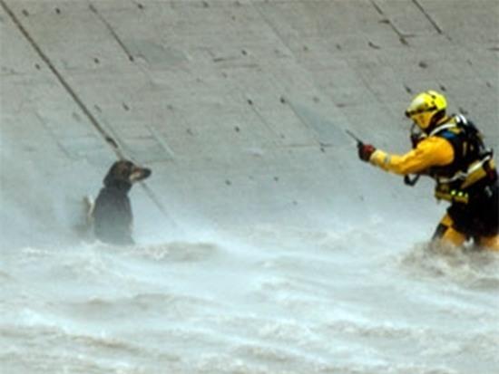 Chú chó bị rơi xuống sông, và cách mà người Mỹ đối xử với nó khiến cả thế giới nể phục - Ảnh 3.