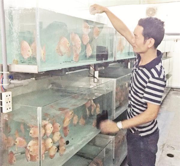 trang trại cá, nuôi cá, cá cảnh,