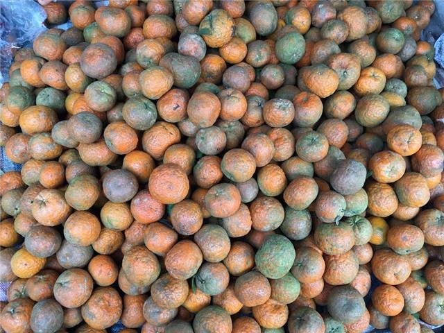 Cam hà giang, cam tuyên quang, cam sành hà giang, cách bảo quản cam, bảo quản theo cách truyền thống, bọc ni lông bảo quản cam