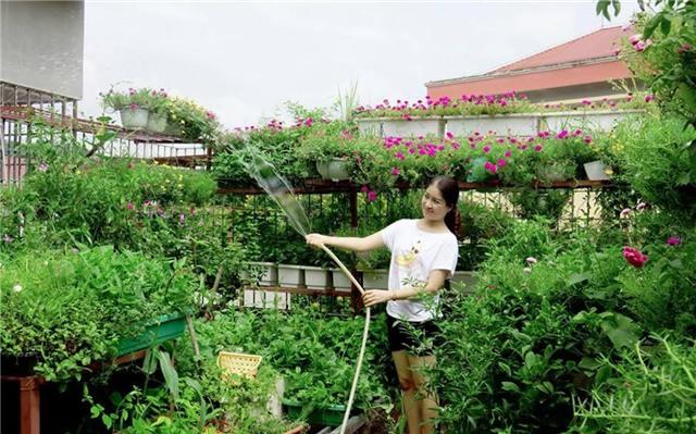 trốn việc về nhà tưới rau, bà chị trưởng phòng trốn việc, rau chết cháy, rau sân thượng, trồng rau trên sân thượng, nắng nóng