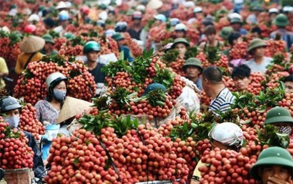 Nông sản, chế biến thực phẩm, thủy hải sản, công nghệ chế biến thực phẩm, đồ uống, hàng tiêu dùng,
