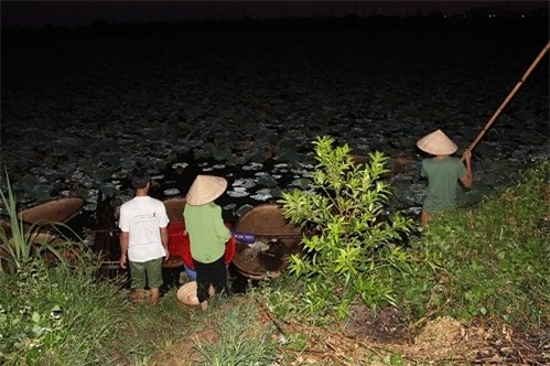 Trà cổ, Hà Nội, ướp sen, trà sen, Hồ Tây, Tây Hồ, nông dân, trà đá, vỉa hè, hoa sen, hồ sen