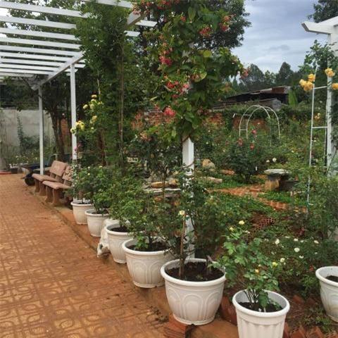 Vườn hoa hồng, vườn cây, hoa hồng, ban công, trồng hoa, cây cảnh, vườn rau, ông chồng 7x