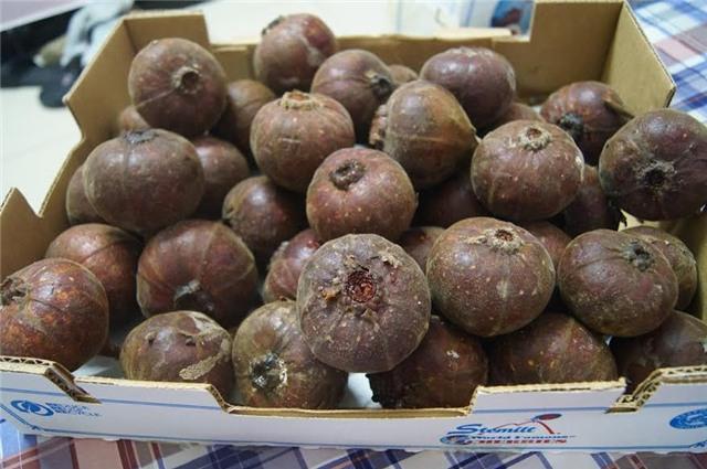 sung khổng lồ, quả vả rừng, ngõa mật rừng, dân hà thành, đặt mua ngõa mật rừng