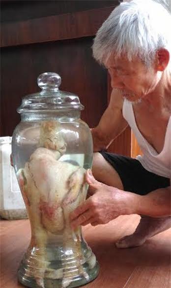 gà đông tảo ngâm rượu, gà đông tảo, gà tiến vua, đặc sản gà đông tảo, gà đông tảo khoái châu