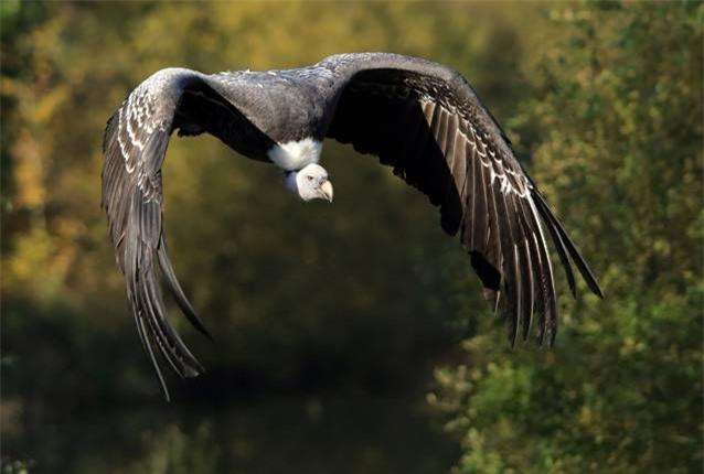 Bạn có biết một con chim có thể bay cao đến mức nào không? - Ảnh 2.