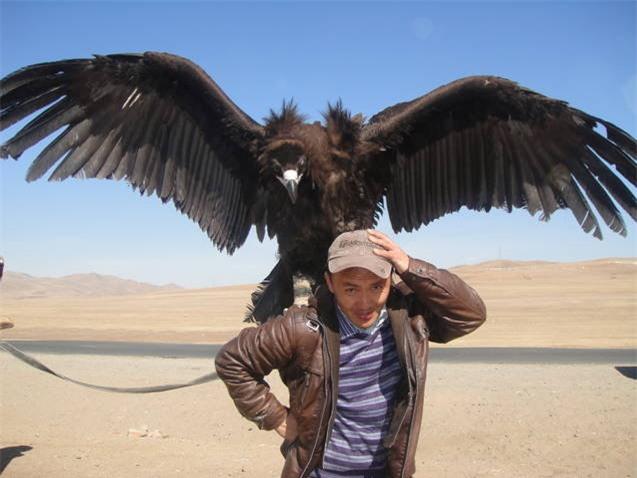Bạn có biết một con chim có thể bay cao đến mức nào không? - Ảnh 3.
