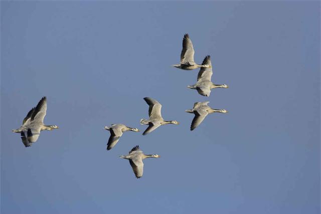 Bạn có biết một con chim có thể bay cao đến mức nào không? - Ảnh 4.