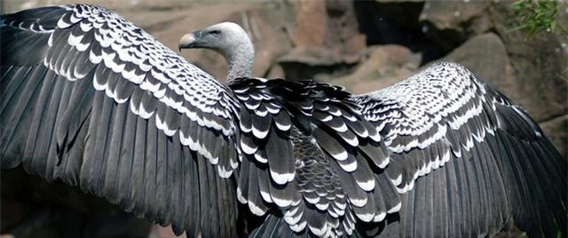 Bạn có biết một con chim có thể bay cao đến mức nào không? - Ảnh 6.