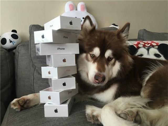 Thiếu gia giàu có nhất Trung Quốc mua hẳn 8 chiếc iPhone 7 và iPhone 7 Plus cho chó cưng - Ảnh 2.