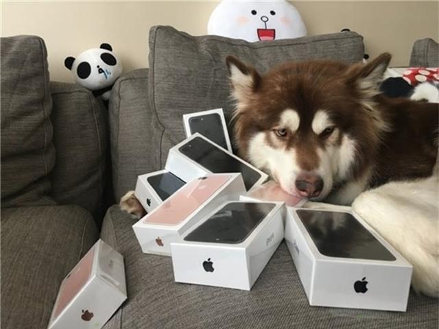 Thiếu gia giàu có nhất Trung Quốc mua hẳn 8 chiếc iPhone 7 và iPhone 7 Plus cho chó cưng - Ảnh 3.