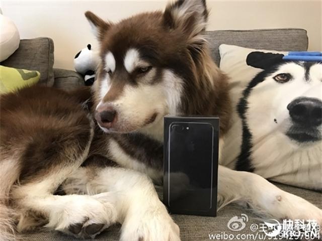 Thiếu gia giàu có nhất Trung Quốc mua hẳn 8 chiếc iPhone 7 và iPhone 7 Plus cho chó cưng - Ảnh 4.