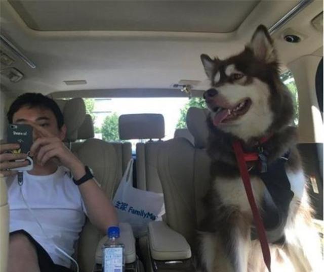 Thiếu gia giàu có nhất Trung Quốc mua hẳn 8 chiếc iPhone 7 và iPhone 7 Plus cho chó cưng - Ảnh 5.