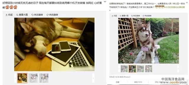 Thiếu gia giàu có nhất Trung Quốc mua hẳn 8 chiếc iPhone 7 và iPhone 7 Plus cho chó cưng - Ảnh 6.