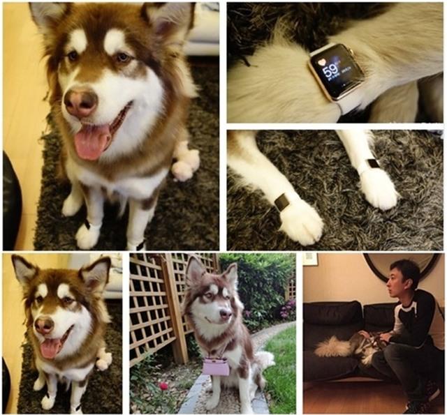 Thiếu gia giàu có nhất Trung Quốc mua hẳn 8 chiếc iPhone 7 và iPhone 7 Plus cho chó cưng - Ảnh 7.